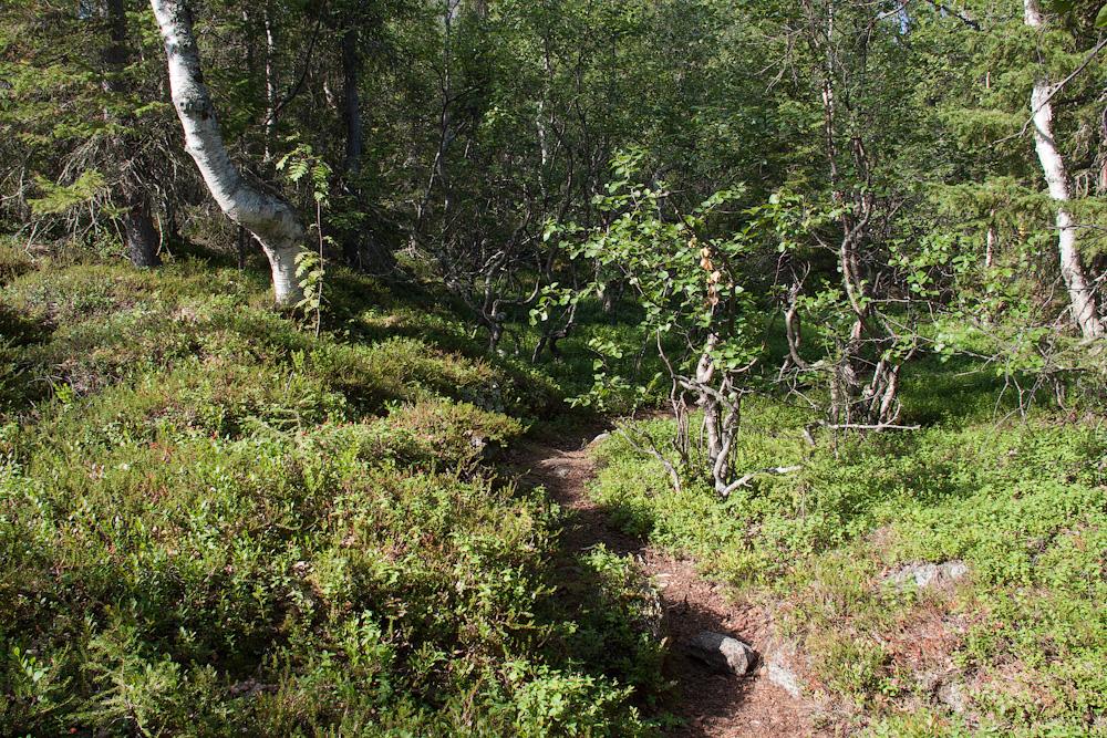 тропа субарктический лес
