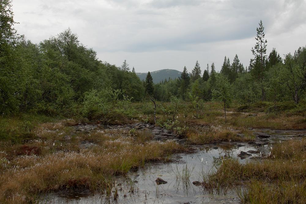 дорога в Хибины Умбозеро