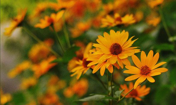 Август цветы - resize