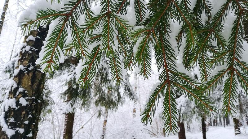 Волшебный реверанс зимы