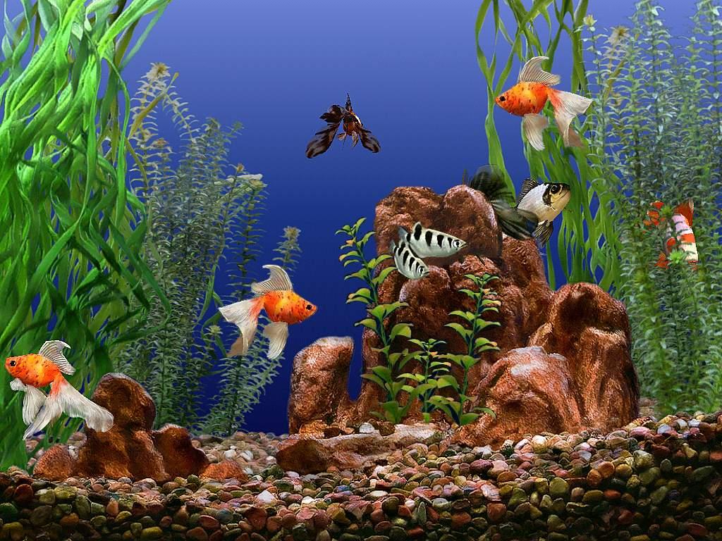 Фон для аквариума картинки для детей