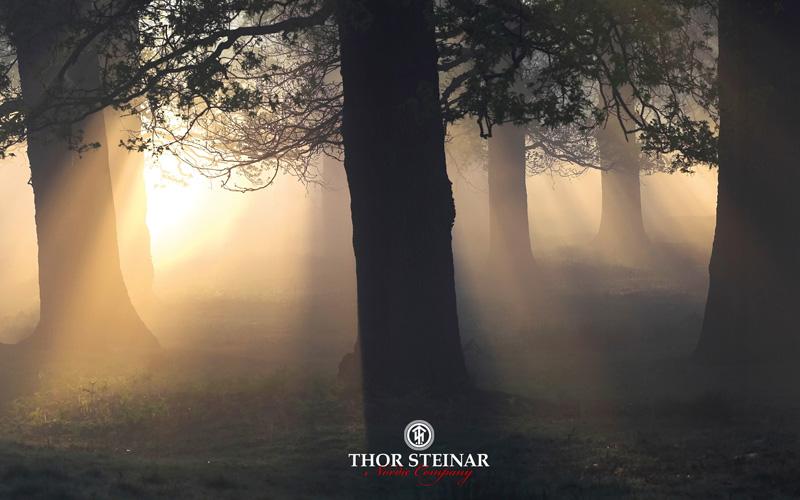 thor-steinar-bild-001