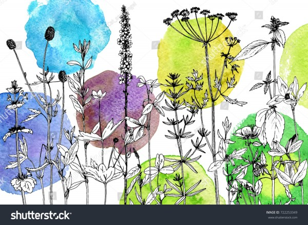 stock-vector-vector-drawing-wild-plants-herbs-and-flowers-at-watercolor-background-botanical-illustration-in-722253349