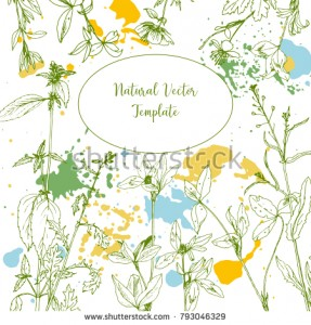 stock-vector-vector-background-with-drawing-wild-plants-herbs-and-flowers-and-paint-stains-botanical-793046329.jpg