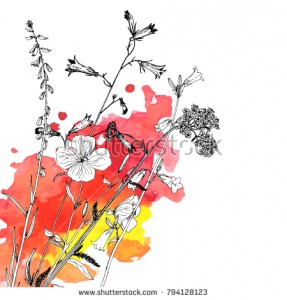 stock-vector-vector-background-with-drawing-wild-plants-herbs-and-flowers-and-paint-stains-botanical-794128123.jpg