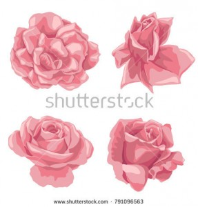stock-vector-set-of-vector-drawing-pink-roses-flowers-isolated-floral-elements-hand-drawn-botanical-791096563.jpg