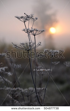 stock-photo-frost-on-autumn-dry-grass-early-in-the-morning-504877738
