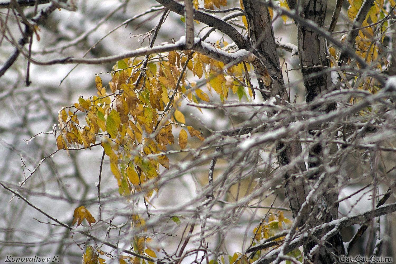 Недоопавшие желто-зеленые листочки