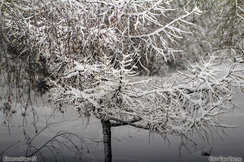 Первый осенний снег