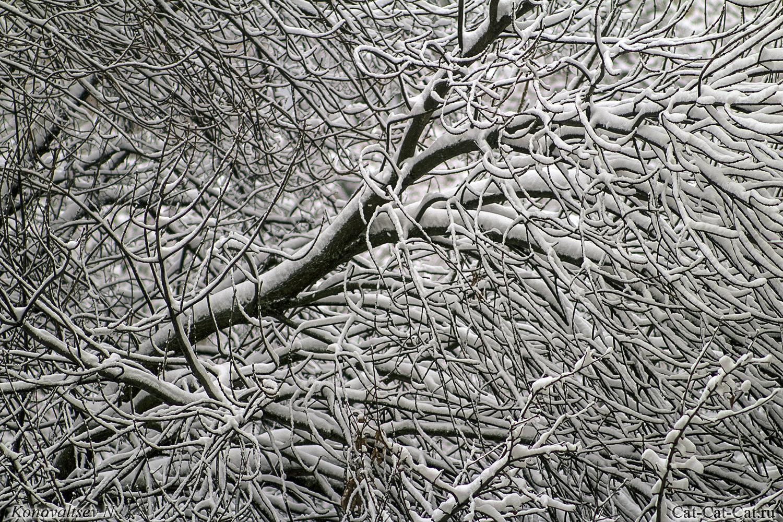Заснеженные ветви создают замысловатый рисунок