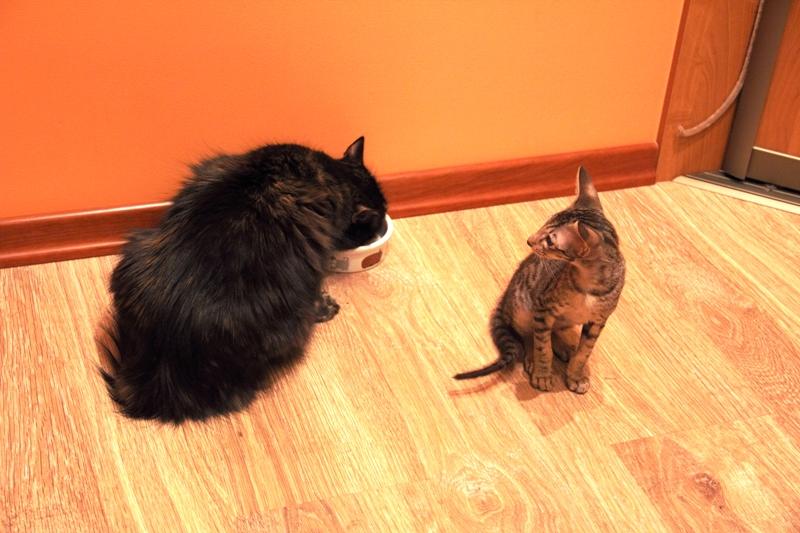 201107_Cat_11_800