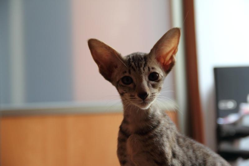 201107_Cat_14_800