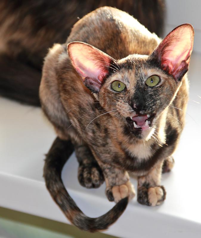 2011_Cat10
