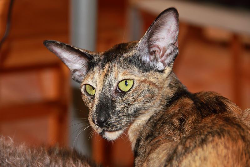 201106_Cat_1