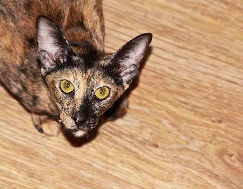 20110815_Cat-1