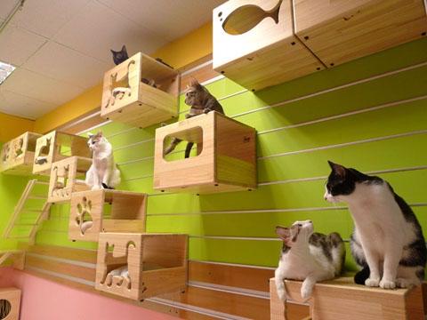 102395434_cat_house17