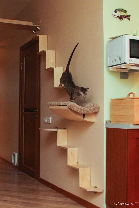 Домики для кошек на стене