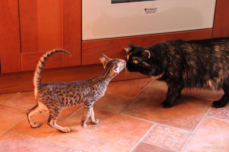 201107_Cat_1