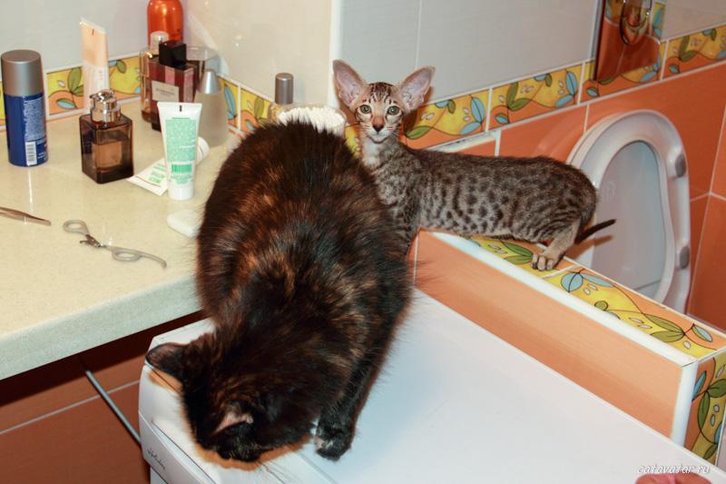 201107_Cat_4