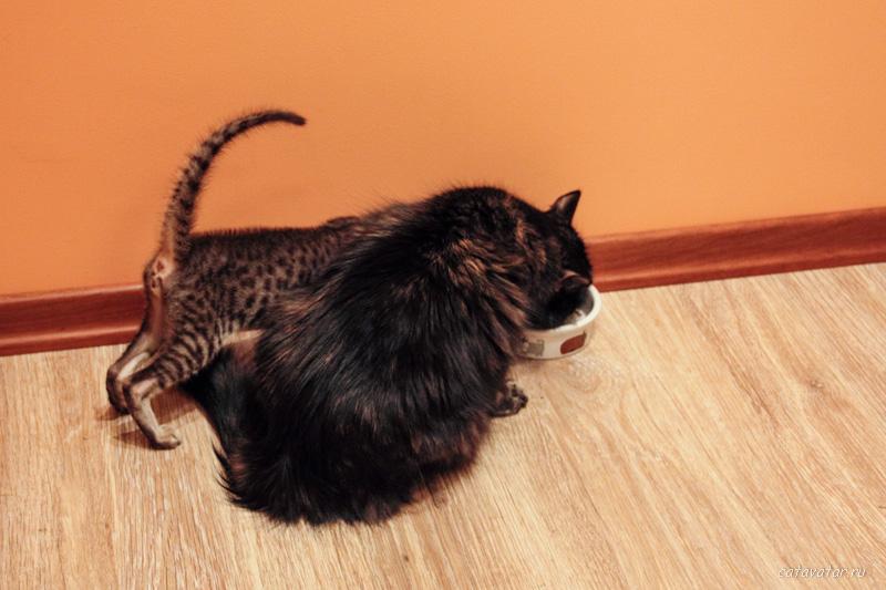 201107_Cat_10