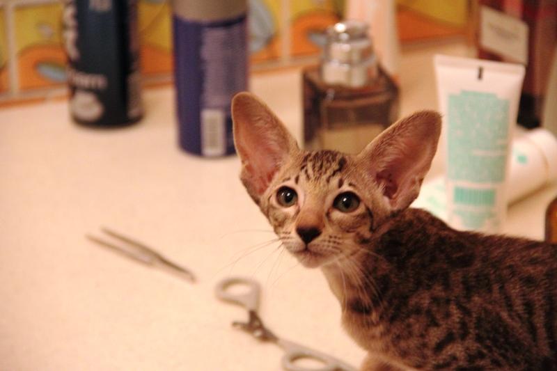 201107_Cat_5_800