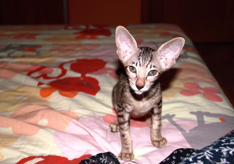 201107_Cat_7_800