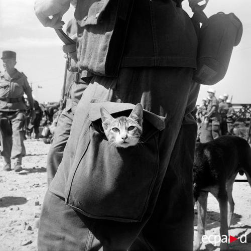 Тайный пассажир 5 пех полк  ИЛ садится на корабль Пастёр янв 1956 Зигмунд Михайловский
