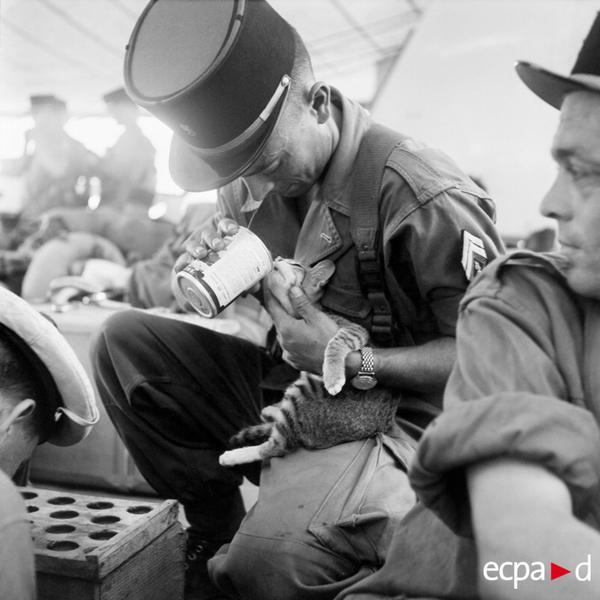 5 пех полк ИЛ покидает индокитай на Пастёре. Кот уезжает вместе с ними янв 1956 Зигмунд Михайловски
