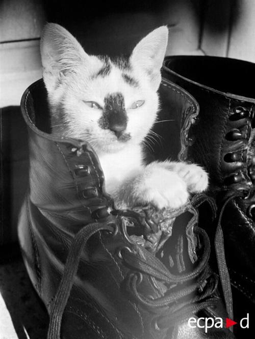 Котенок в рейнджерах Крит авг 1943 Робер Робер Бауер