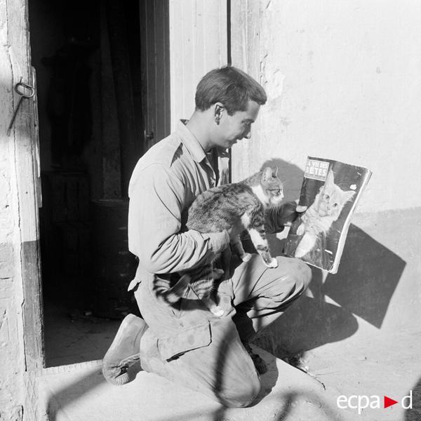 Солдат показывает коту журнал Жизнь животных пост Аомар Алжир нояб 1960 фото Гаво