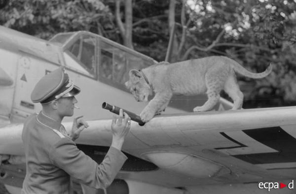 Лейтенант Франц фон Ферра  с талисманом эскадрильи эстребителей 1939 1945