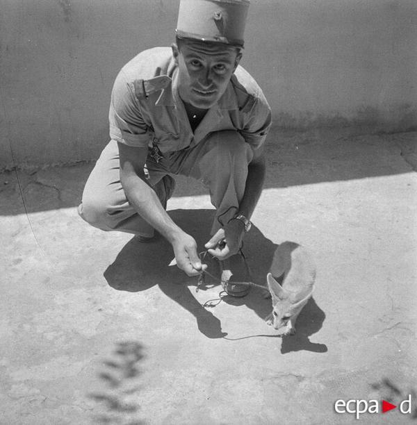 Солдат и фенек июль 1958 Котто