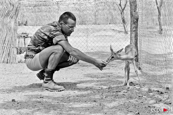Фр силы в Чаде лейтенант Рокан и газель талисман отряда Феникс фев март 1980 Марк-Андре Десанж