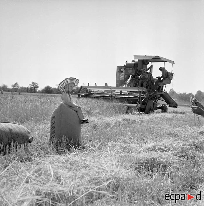 Жатва на ферме Канто На перв плане сун фотографа Ги Сме лето 1961 А Сме