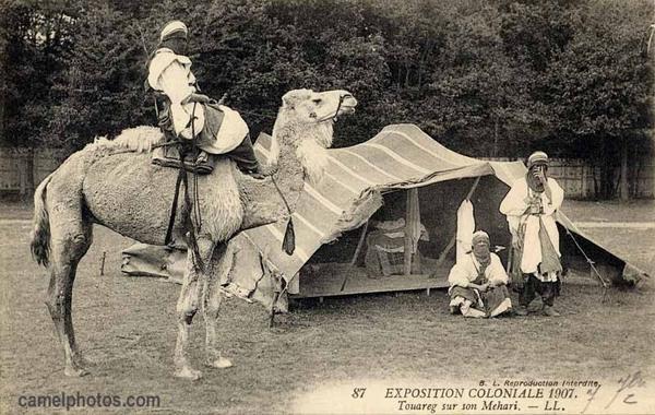 Открытка 1907 Туарег