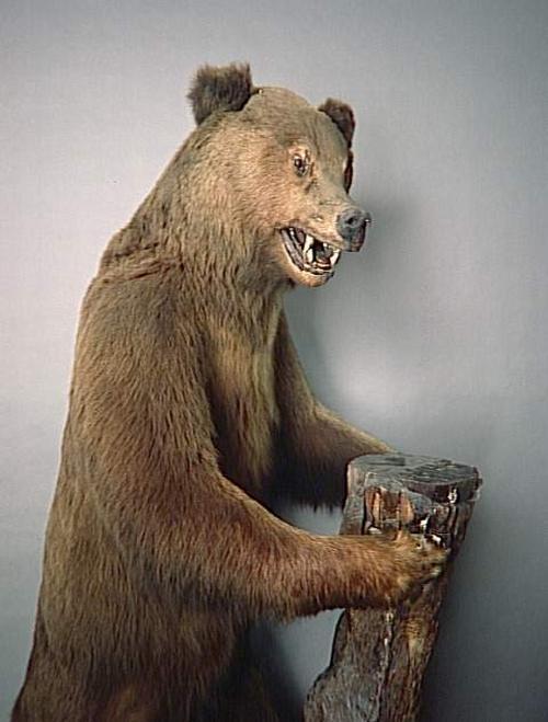 Медведь чучело Компьень подарок Ник 2