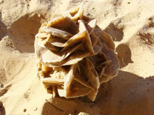 Песчаная роза