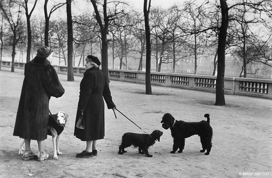 париж 1953 20 в парке