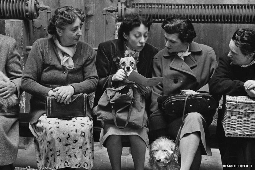 париж 1953 22 дамы с собаками