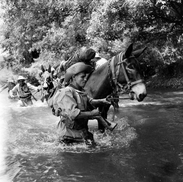патруль на мулах пересекает реку апр 1952