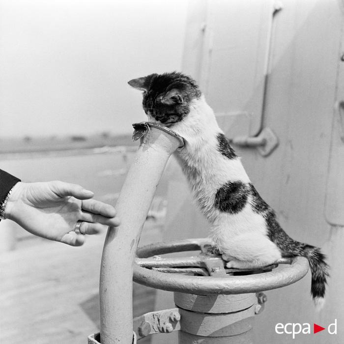 На борту кор Гюстава Зад май 1954 Р Бернар