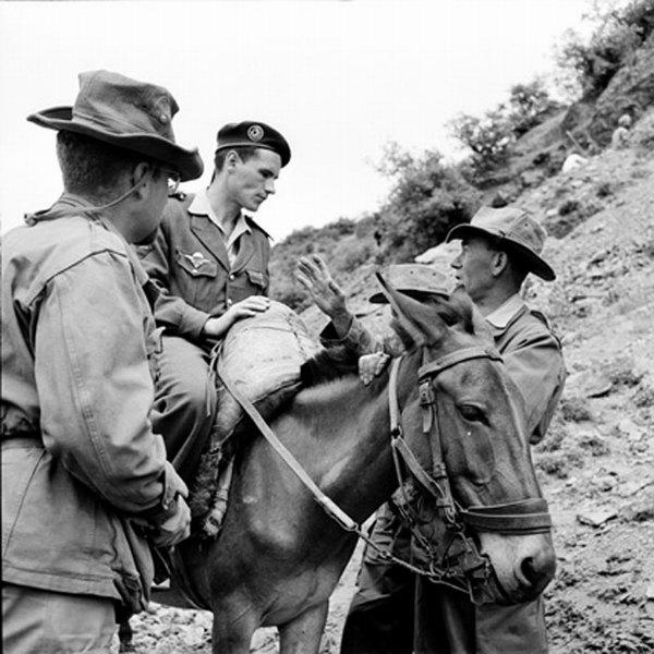 Лейтенант из 513 трансп отряда на муле июнь 1965 Гайан