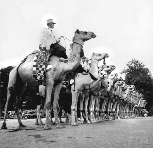 Мехаристы 1955