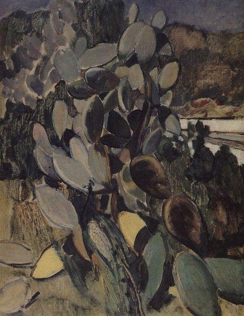 кактусы 1907