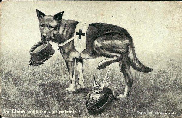 01 собака
