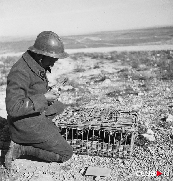 фев 1943 тунис ст кап.jpg