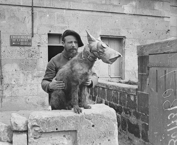 В собачьем питомнике апр 1918 Морис Булэ.jpg