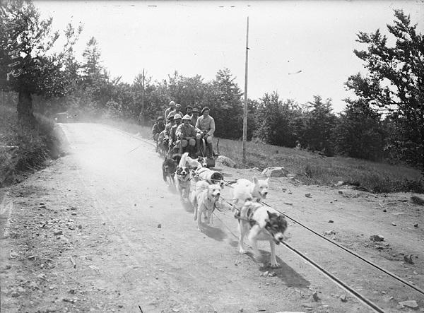 Использование собак с Аляски для перевозки вагонеток по колее 60 см Вогезы авг 1916 Альбер Моро.jpg