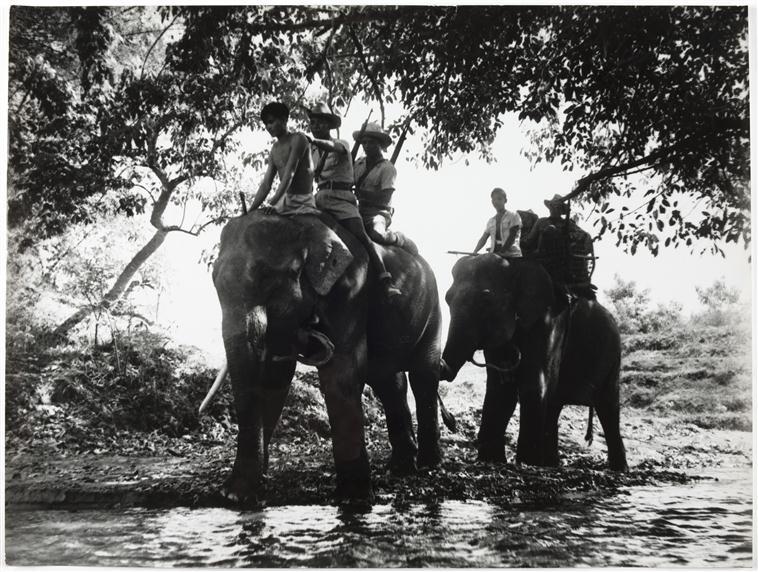Слоновый патруль 4 вьет дивизия Д Камю.jpg