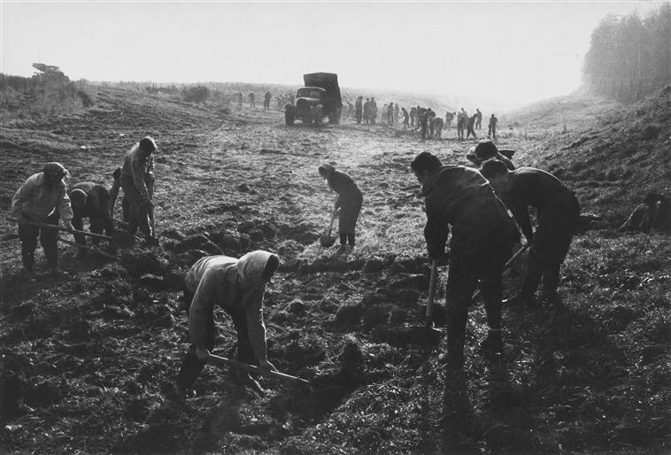 Сов студенты в поле 1960.jpg
